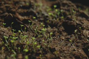 5 Ways to Grow Your Business (Without Venture Capital)