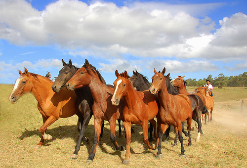 Horses For Courses on Social Media- Short-Form vs. Long-Form Content
