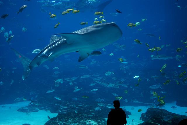 Shark Tank_CL